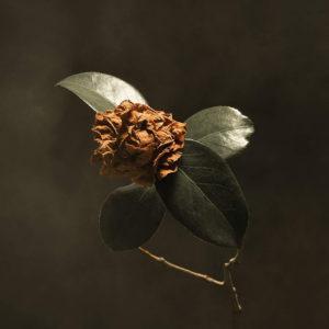 St. Paul & The Broken Bones: Young Sick Camellia